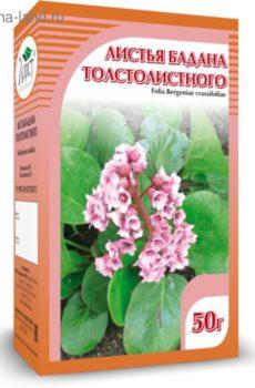 Бадана лист толстолистного 50 гр в интернет магазине Pepper.kz